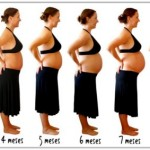 caracteristicas do segundo mes de gestação