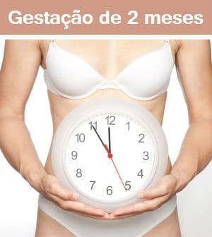 gravidez 2 meses
