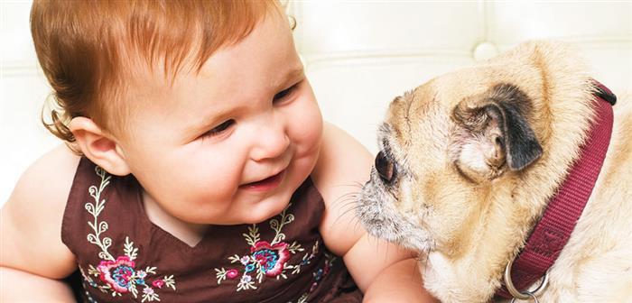 amizade de cachorro com bebe