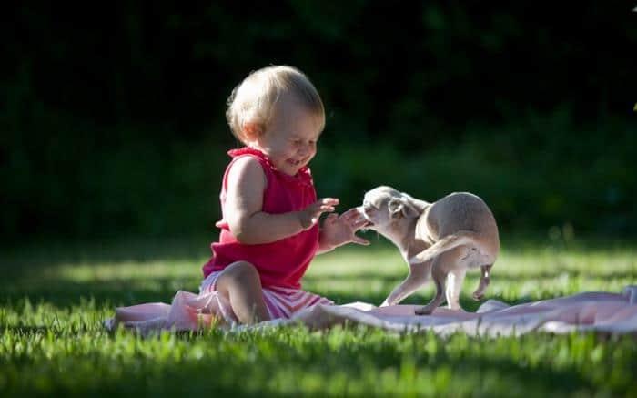bebe na grama com cachorro