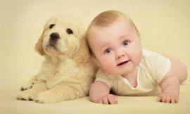 Como lidar com o ciúme do bichinho de estimação com o bebê