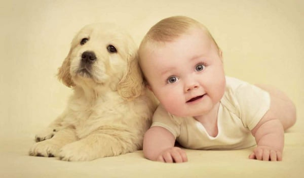 You are currently viewing Como lidar com o ciúme do bichinho de estimação com o bebê
