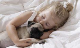 Grávidas, bebês e a convivência com animais