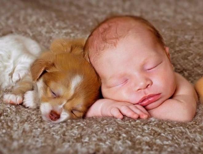 You are currently viewing 15 fotos de bebês com cachorro dormindo