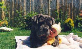 Bebês e Cachorros: 5 Vantagens em estimular essa convivência
