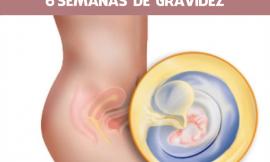 6 semanas de gravidez: Sintomas, Tamanho da barriga e  Embriologia