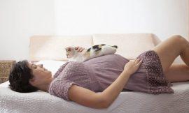 Gestante e gatos: qual o perigo real desta convivência?
