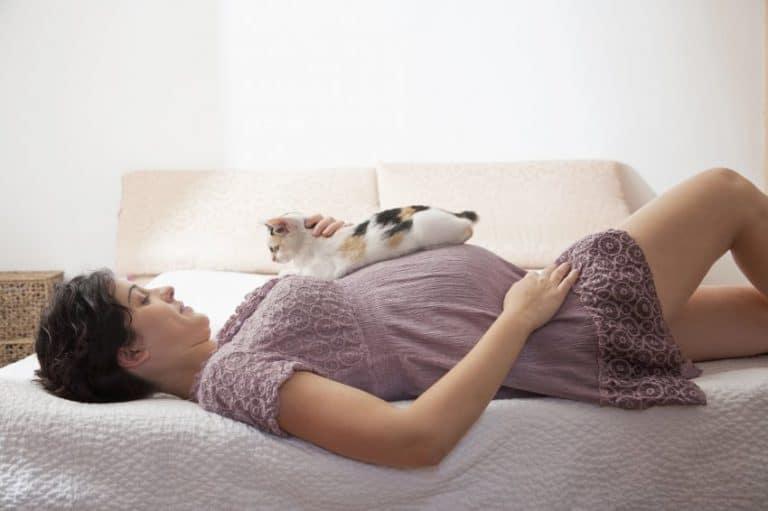 gato e grávida na toxoplasmose