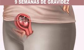 9 semanas de gravidez: sintomas e tamanho da barriga