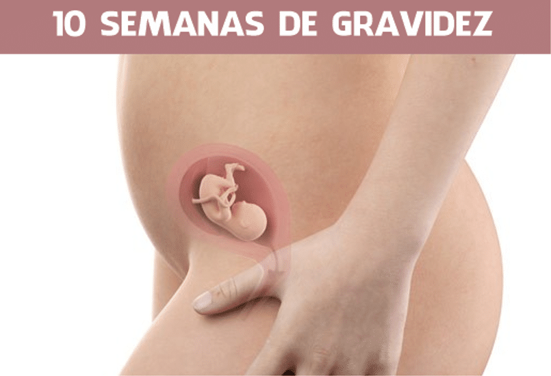 You are currently viewing 10 Semanas de gravidez