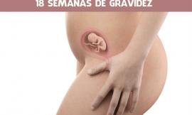 18 semanas de gravidez