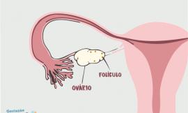 O que é folículo no ovário direito?