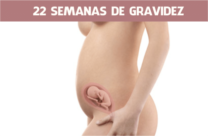 You are currently viewing 22 semanas de gravidez