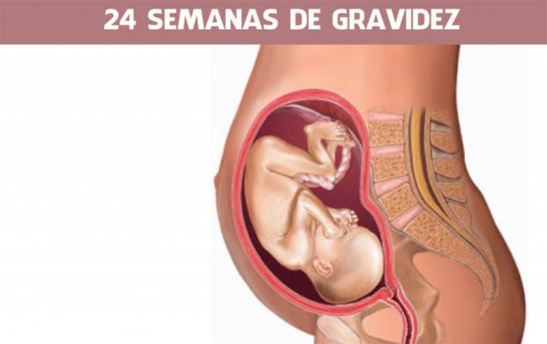 Read more about the article 24 semanas de gravidez