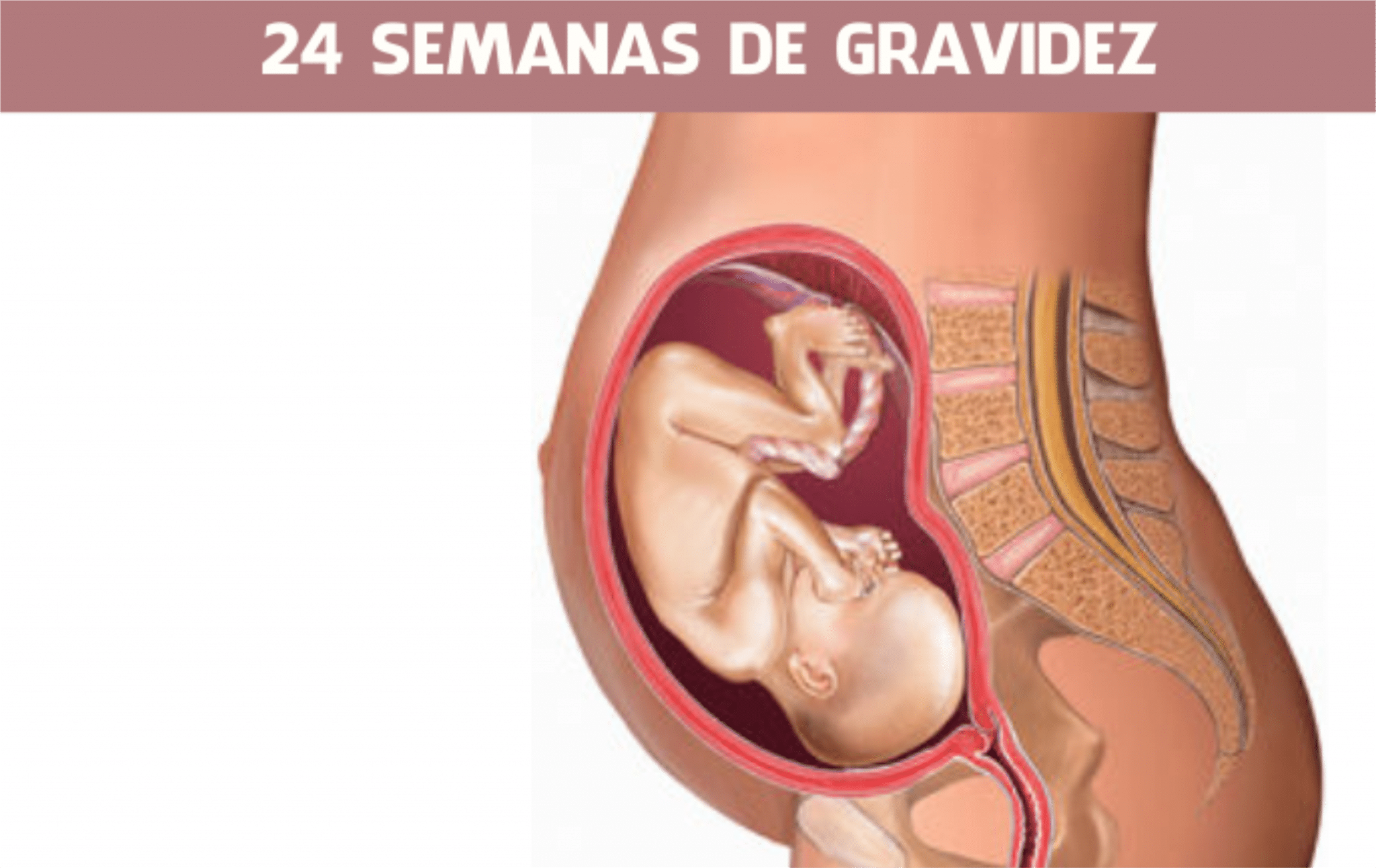 You are currently viewing 24 semanas de gravidez