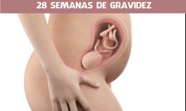 28 semanas de gravidez
