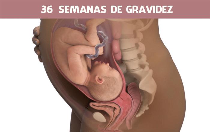 Read more about the article 36 semanas de gravidez
