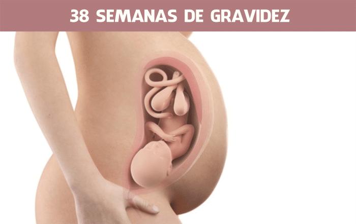 38 semanas de gestação são quantos meses