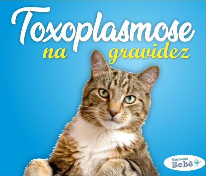 toxoplasmose gato