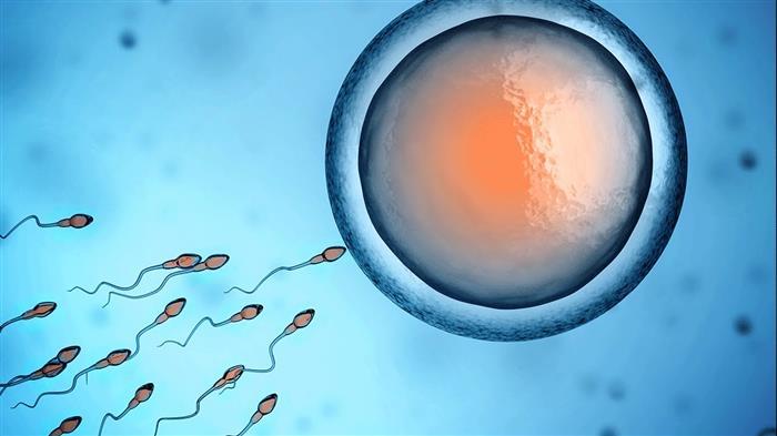 desenvolvimento embrionário humano semana a semana