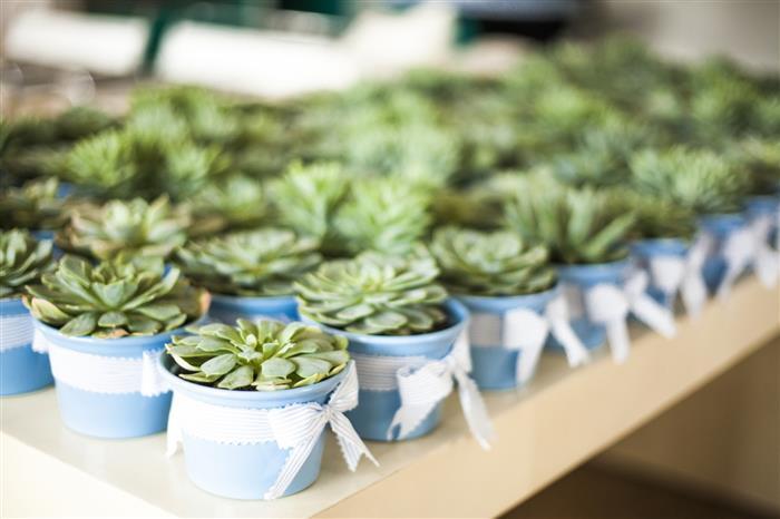 plantas para chá de fraldas