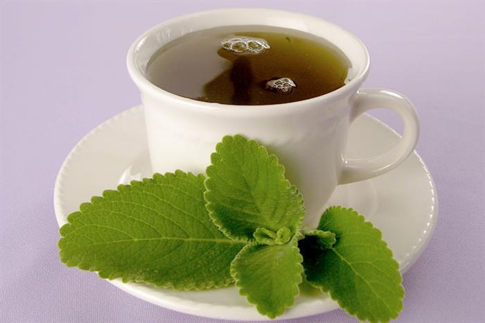 chá de boldo aborta