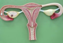 função do endometrio