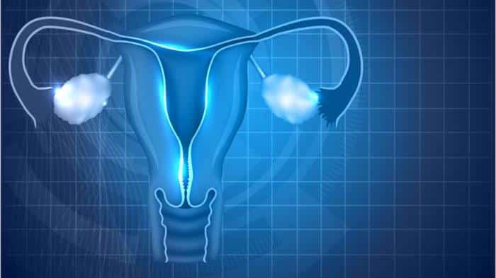 endometrio na gravidez
